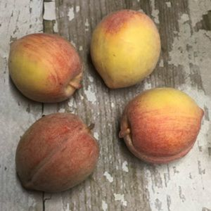 Peaches Decor Artificial Fake Realistic Looking